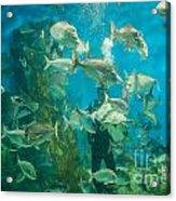 Cool Aquarium Acrylic Print by Ray Warren