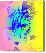 The Coolest Cat You Have Ever Seen  Acrylic Print