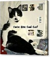 Cool Cat Greeting Card Acrylic Print