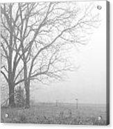 Cool Damp Foggy Acrylic Print