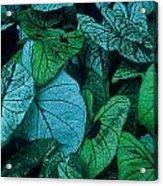 Cool Leafy Green Acrylic Print