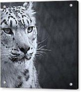 Cool Leopard Acrylic Print
