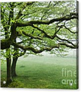 Cool Misty Day At Blackbury Camp Acrylic Print