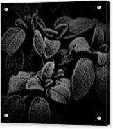 Cool Sage Acrylic Print by John Monteath