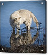 Cooling Off Acrylic Print