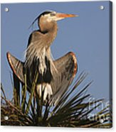 Great Blue Heron Air Conditioning Acrylic Print
