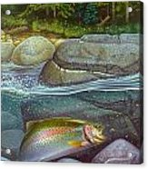Coolwaters Rainbow Trout Acrylic Print by Jon Q Wright
