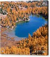 Cooney Lake Larches Acrylic Print