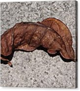 Copper Colored Leaf On Concrete Acrylic Print
