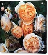 Copperblush Acrylic Print