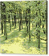 Copse Of Trees Sunlight Acrylic Print