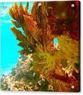 Coral Fern Acrylic Print