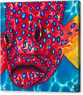 Coral Grouper Acrylic Print