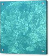 Coral In Maui Acrylic Print