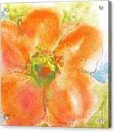 Coral Poppy II Acrylic Print