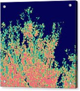Coral Reef Abstract Acrylic Print