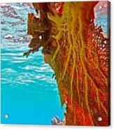 Coral Reef Fern Acrylic Print
