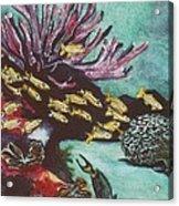 Coral Reef Acrylic Print