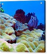 Corals Underwater Acrylic Print