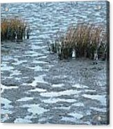 Cord Grass At Low Tide In San Francisco Bay Acrylic Print