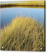 Cordgrass And Marsh, Southern Acrylic Print