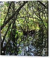 Corkscrew Swamp 3 Acrylic Print