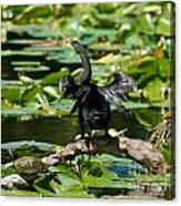 Cormorant And Turtle Acrylic Print