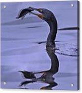 Cormorant Catch Reflection Beauty Acrylic Print