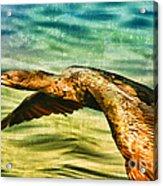 Cormorant On The Move Acrylic Print
