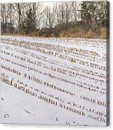 Corn Code Acrylic Print