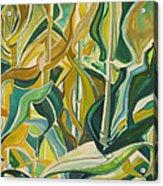 Corn Curves Acrylic Print