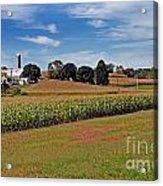 Corn Farmer Acrylic Print