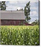 Corn Field And Barn Acrylic Print