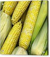 Corn On The Cob II Acrylic Print