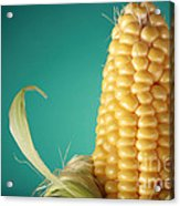 Corn On The Cob Acrylic Print