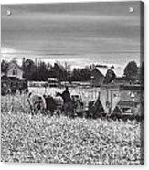 Corn Picker November 2013 Acrylic Print