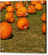 Corn Plants With Pumpkins In A Field Acrylic Print
