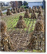 Corn Shocks Amish Field Acrylic Print