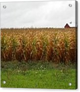 Cornfield And Farmhouse Acrylic Print