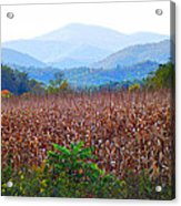 Cornfield In The Mountains Acrylic Print