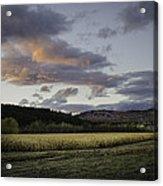 Cornfield Sunset Acrylic Print