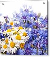 Cornflower And Chamomile Bunch Blooms  Acrylic Print