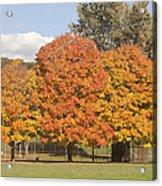 Corning Fall Foliage 1 Acrylic Print