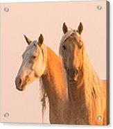 Corona And Cheyenne At Dawn Acrylic Print