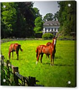 Corralled Horses - Featured In And Lets All Participate And Abc Groups Acrylic Print