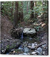 Corte Madera Creek On Mt. Tam In 2008 Acrylic Print