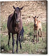 Cortez Colorado Mustangs Acrylic Print