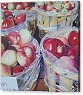 Cortland Apples Acrylic Print