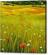 Cortona Poppies Acrylic Print