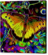 Cosmic Butterfly Acrylic Print by Rebecca Flaig